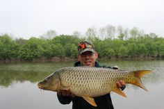A nice common from occoquan Virginia Common Carp, Carp Fishing, Virginia, Nice, Board, Sports, Hs Sports, Carp, Nice France