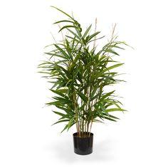 zimmerpflanzen topfpflanzen g nstig online kaufen ikea wishlist pinterest topfpflanzen. Black Bedroom Furniture Sets. Home Design Ideas