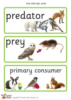 Teacher's Pet - Food Chain Posters - FREE Classroom ...