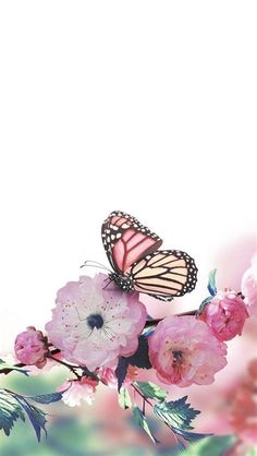 IPhone Wallpaper | Butterfly Wallpaper Iphone, Butterfly