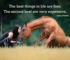 No matter how much we spend on our horses they are still number one in our heart.