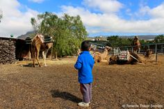 Our son had a lot of fun this day at Camel Park Tenerife