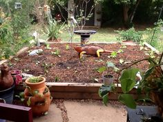 Winter raised garden planted;) Swiss chard, kale, spinach, lettuce, and cilantro