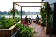 Pergola, Terrace Garden, Amsterdam, Patio, Maya, Holland, Outdoor Decor, Garden Ideas, Middle
