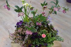 Lenzrosen - Blüten, wenn der Schnee noch liegt | MDR.DE