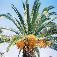 Mallorca – Spain » Karl Bluemel Photography Film Photography, Spain, Plants, Garden, Holiday Travel, Pictures, Garten, Planters, Gardening