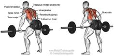 Bent over barbell row. A major compound pull exercise! Main muscles worked: Latissimus Dorsi, Middle and Lower Trapezii, Infraspinatus, Teres Minor, Rhomboids, Teres Major, Brachialis, Brachioradialis, Pectoralis Major, and Posterior Deltoid.