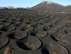 Lava fields of Lanzarote Island, Spain The winegrowers of Lanzarote work on lava grains and deliver some good wines. Season is over now.