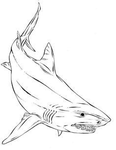 bull shark p5735 coloring page  free printable coloring