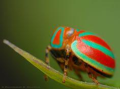 Planthopper. Great taste in colours!