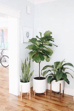houseplants #homedecor #plantsathome