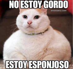 memes de gatos - No estoy gordo...