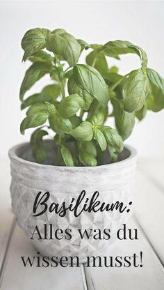 Alles was du über Basilikum wissen musst! Das aromatische Kraut ist nicht nur ideal zum Kochen, Basilikum besitzt außerdem wertvolle Heilwirkungen. Planter Pots, Home And Garden, Vegetables, Health, Plants, Food, Fitness, Gardens, Medicinal Plants