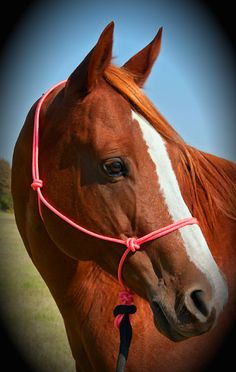 PINK Charity Rope HalterTM - donates $1/halter to www.bcrfcure.org (Breast Cancer Research Foundation)
