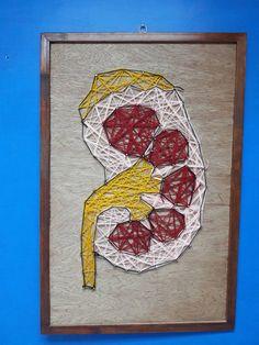 String art kidney anatomy