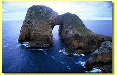 Poor Knight's Islands, Northland, NZ