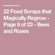 22 Food Scraps that Magically Regrow - Page 9 of 23 - Bees and Roses