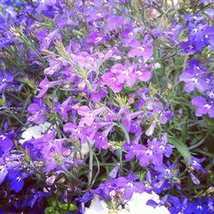 #purpleflowers #purple #joy