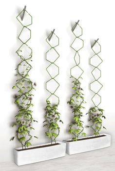 Going up! Take your garden vertical with this trellis idea.