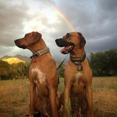 What I would certainly be happy to find at the end of a rainbow--two handsome…