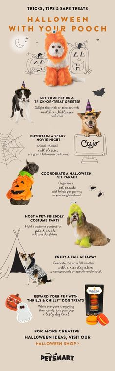 It's Halloween time! Here are six ways to celebrate Halloween with your pet, from trick-or-treating to costumes to dog treats!