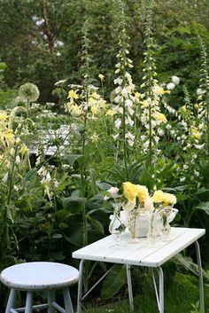Shabby soul: Sunday garden - Roserogpatina - Shady perennials