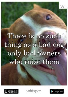 This is the most true thing about dogs. Why are Pitbulls aggressive? Because they probably get beat every day