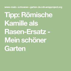 Tipp: Römische Kamille als Rasen-Ersatz - Mein schöner Garten