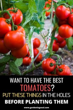 Vegetable Gardening Ideas Luckily for you, there are some hacks and tricks that every gardener should know, in order to improve the quality and stimulate the growth of the plants.