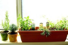 Good article on the very very basic beginnings of starting an indoor herb garden.