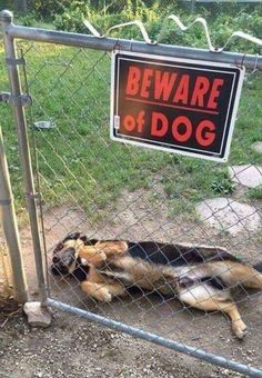 Beware Of Dog...wanting belly rubs
