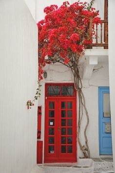 Red painted French doors and red climbing vine/tree