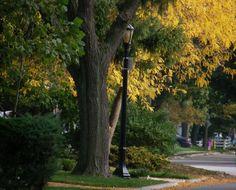 my street in autumn...