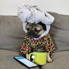 "101.3k Likes, 956 Comments - Doug The Pug (@itsdougthepug) on Instagram: """"Me watching all of my friends post drunk Snapchats"" -Doug"""