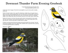 The Gregarious Evening Grosbeak | Downeast Thunder Farm
