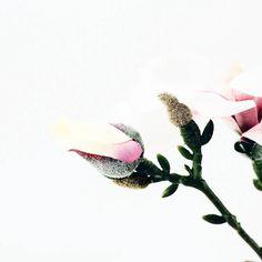 HAVE A WONDERFUL MONDAY  // Kommt gut in die neue Woche ihr Lieben  #alittlefashion #vsco #vscocam #liveauthentic #thatsdarling #darlingmovement #flashesofdelight #livethelittlethings #nothingisordinary #thehappynow #visualsoflife #visualsgang #darlingweekend #pursuepretty #petitejoys #morningslikethese #calledtobecreative #livecolorfully #toldwithexposure #acolorstory #fbloggers #fashionblogger #styleblogger #lifestyleblog #lifestyleblogger #diyblog #flowers #flowersofinstagram #monday…