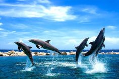 Ok i will idmit it those dolphins are just so so much better at swimming then me