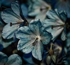 Little Blue Flowers | Jacqueline A. Sheen