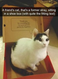 Wholesome Cat Snapchats Memes That Will Make You LOL (14 Pics) #funny #cats #snapchat #hilarious #humor #memes #pictures