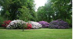 Rhododendronpark in Bremen, Germany
