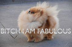 Bitch I'm fabulous!