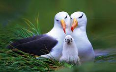 Beautiful Family by 111112222233333 via http://ift.tt/2jjasSD