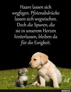 Die 37 Besten Bilder Zu Susse Hunde Spruche Hunde Susse