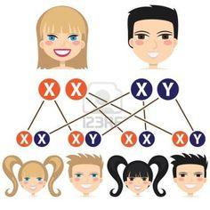 Herencia genética - http://www.menudoembarazo.es/embarazo/etapas-del-embarazo/herencia-genetica