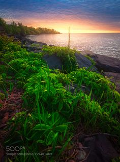The Morning Green by Like_He #nature #travel #traveling #vacation #visiting #trip #holiday #tourism #tourist #photooftheday #amazing #picoftheday