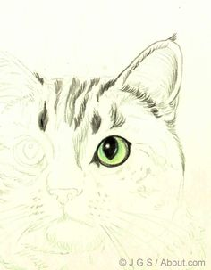 How to Draw a Cat in Colored Pencil: Beginning With the Eyes