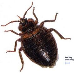 Sleep Tight! Don't Let the Bed Bugs Bite. #bedbugs #pests #health
