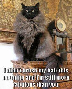Fabulous Cat ..
