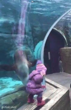 Hải cẩu chơi trò chơi với em bé