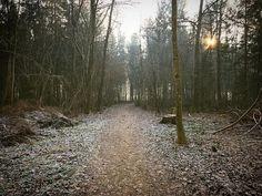 Der Neujahrsspaziergang durch den verzauberten Wald.
